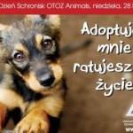 WspieraMY schronisko AZYL w Dzierżoniowie
